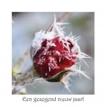 Christmas card F21 - Sparrow Foundation